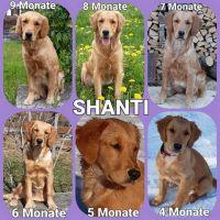AD_Shanti_II